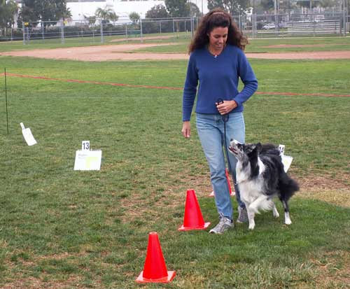 Anne and Zip manuever through the cones in Rally Obedience