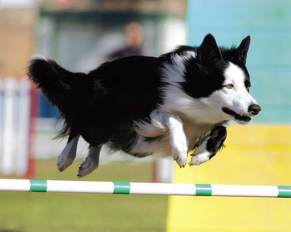 Vic at the Southwest Regionals in 2009, photo by Dynamic Dog Photos