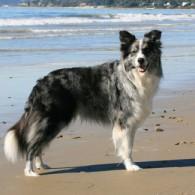 Zip posing at the beach, Photo by Richard Todd