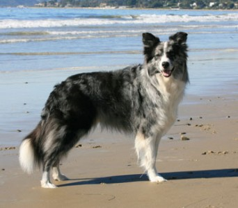Zip posing at the beach, Photo by Richard Todd