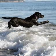 Clover doing an beautiful ocean water entry