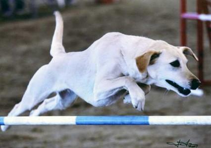 Gidget jumping