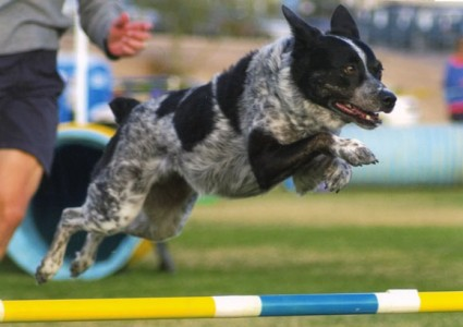 Kiwi jumping