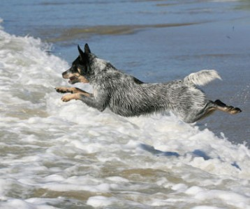 Kylie at the beach jumping the waves, photo by Richard Todd