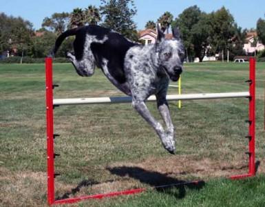 Pepper jumping