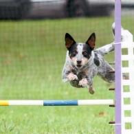 Maizey Jumping