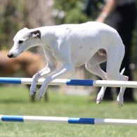 Donny over agility jump