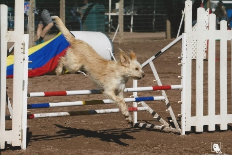 Leo jumping the triple