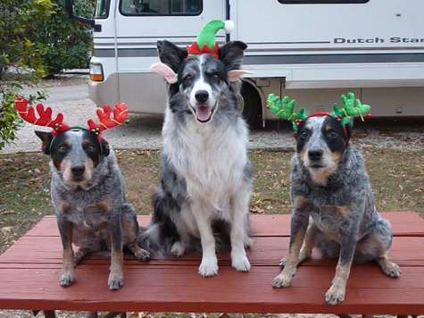 Zip and the girls in Austin with holiday antlers