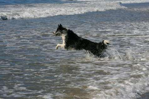 Zip at the ocean enjoying the waves