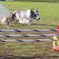 Avid over a triple jump